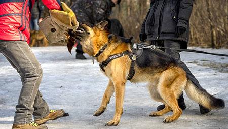 Atlanta dog bit attorney